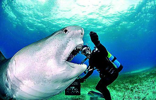 壁纸 动物 海洋动物 鲸鱼 桌面 512_329